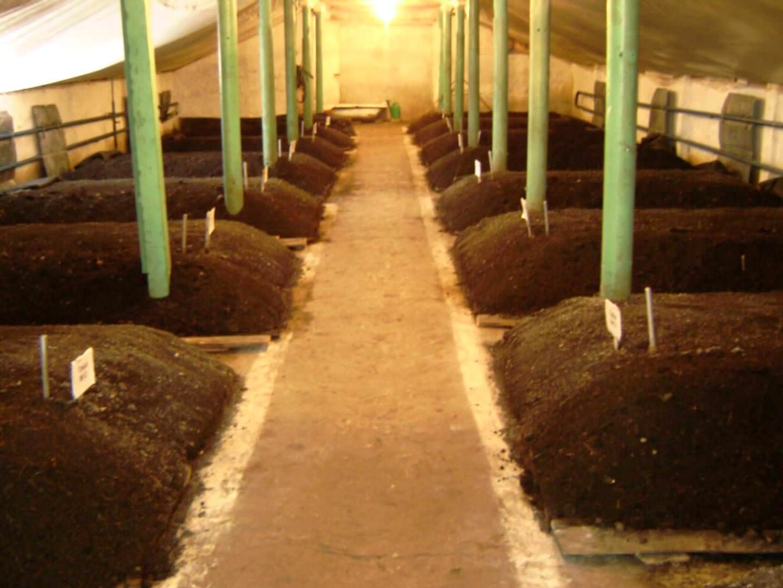 Выращивание и разведение червей как бизнес. Возможно ли разведение